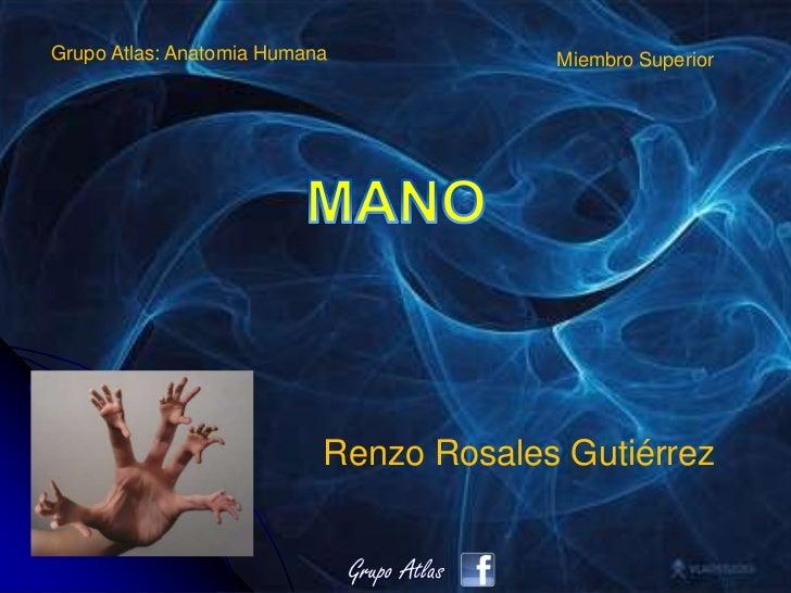 Clase Mano Anatomia Grupo Atlas