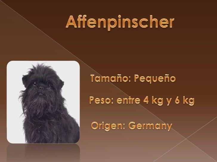 Affenpinscher<br />Tamaño: Pequeño<br />Peso: entre 4 kg y 6 kg<br />Origen: Germany<br />