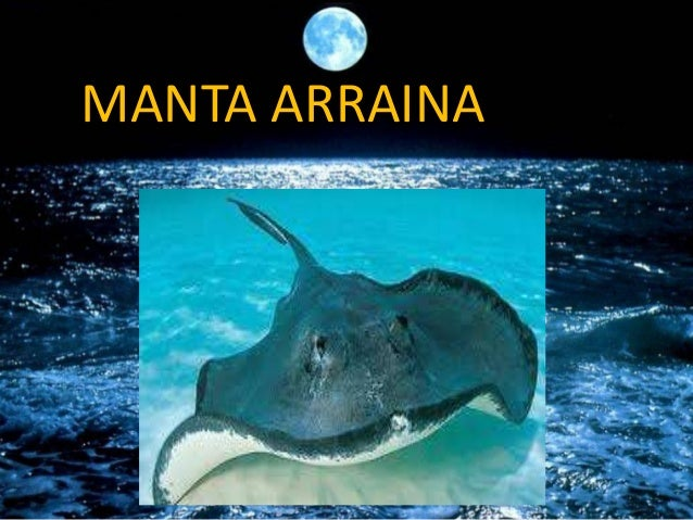 MANTA ARRAINA