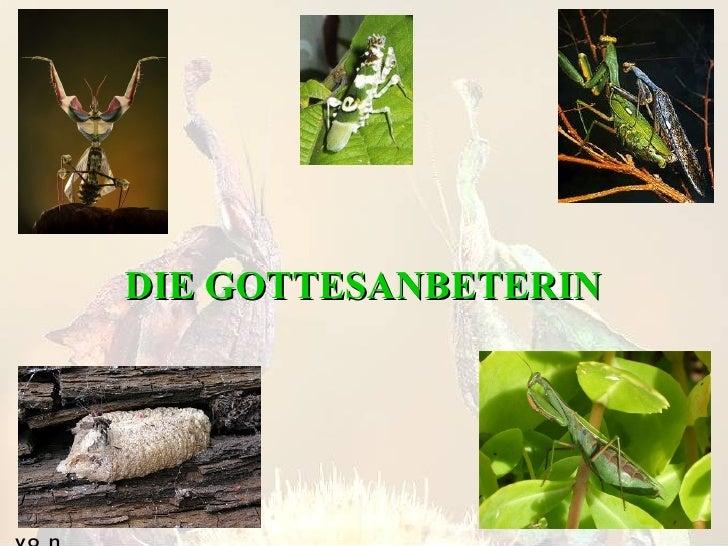 DIE GOTTESANBETERIN von Florian Kutzsche