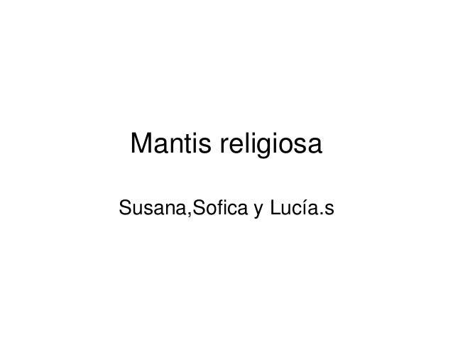Mantis religiosa Susana,Sofica y Lucía.s