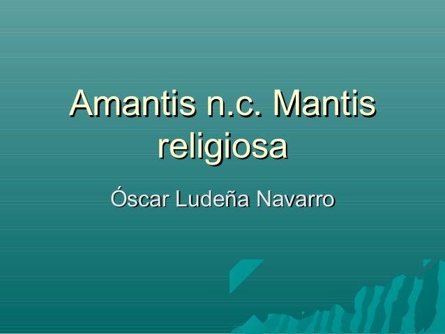 Amantis n.c. MantisAmantis n.c. Mantis religiosareligiosa Óscar Ludeña NavarroÓscar Ludeña Navarro