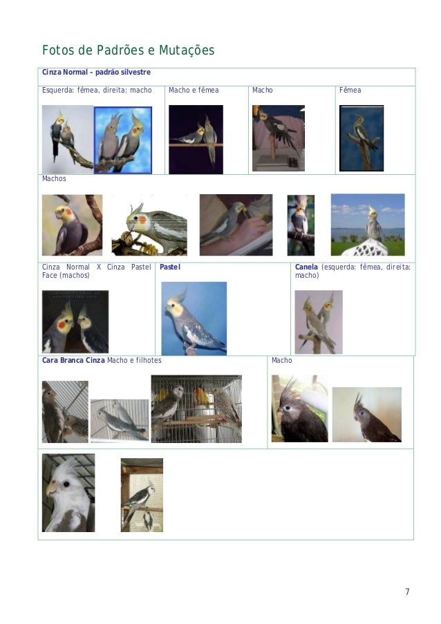 Fotos de Padrões e Mutações Cinza Normal – padrão silvestre Esquerda: fêmea, direita: macho Macho e fêmea Macho Fêmea Mach...