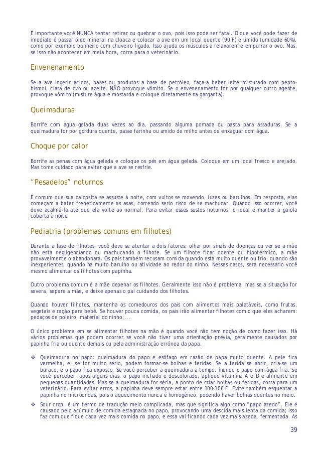Calopsita e Calopsitas - www.calopsitabr.blogspot.com