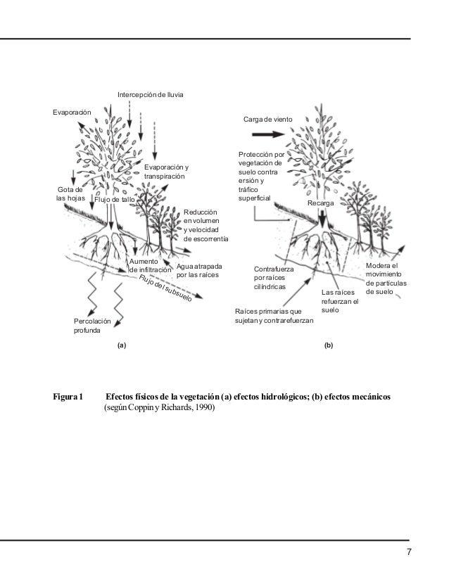 Manual de-bioingenieria