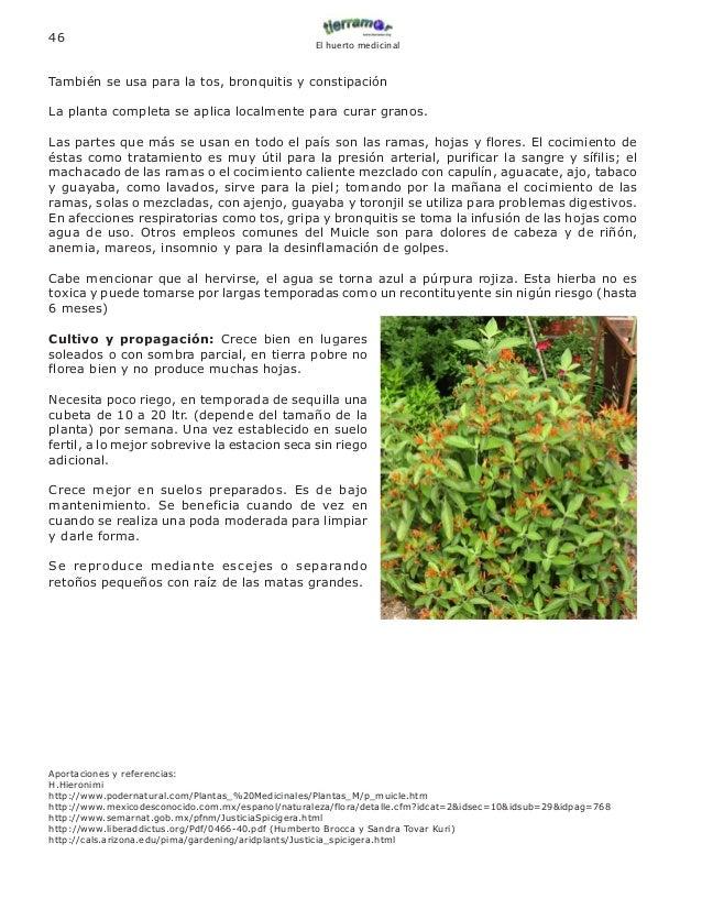 Muicle Planta Medicinal Pdf Download