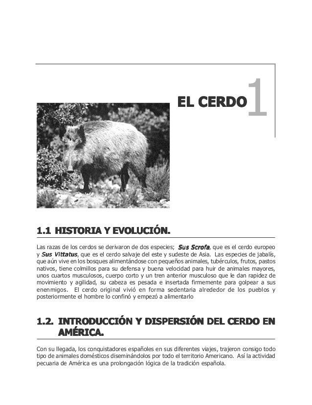Perfecto Anatomía De Un Feto De Cerdo Laboratorio Respuestas Adorno ...