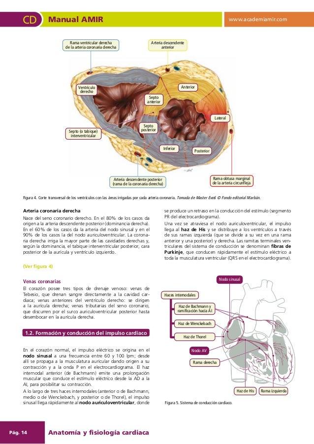 Manual Amir cardiologia y cirugia cardiovascular 6ed