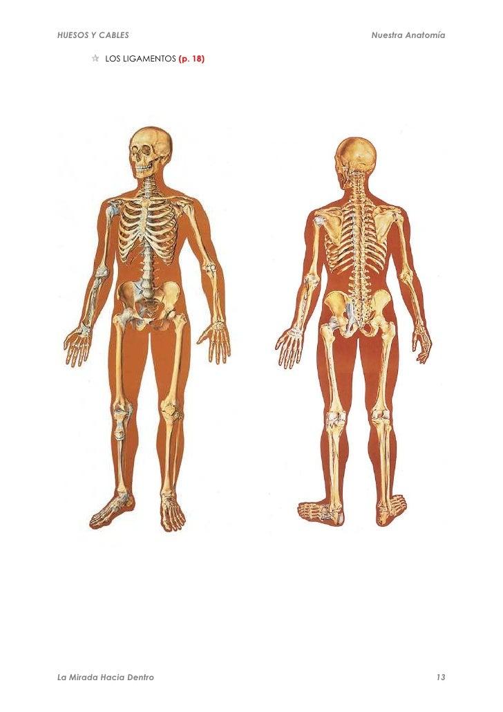Manual anatomía