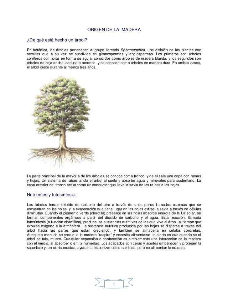 ORIGEN DE LA MADERA¿De qué está hecho un árbol?En botánica, los árboles pertenecen al grupo llamado Spermatophita, una div...