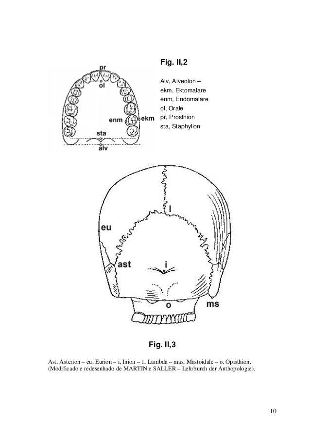 Manual cranio
