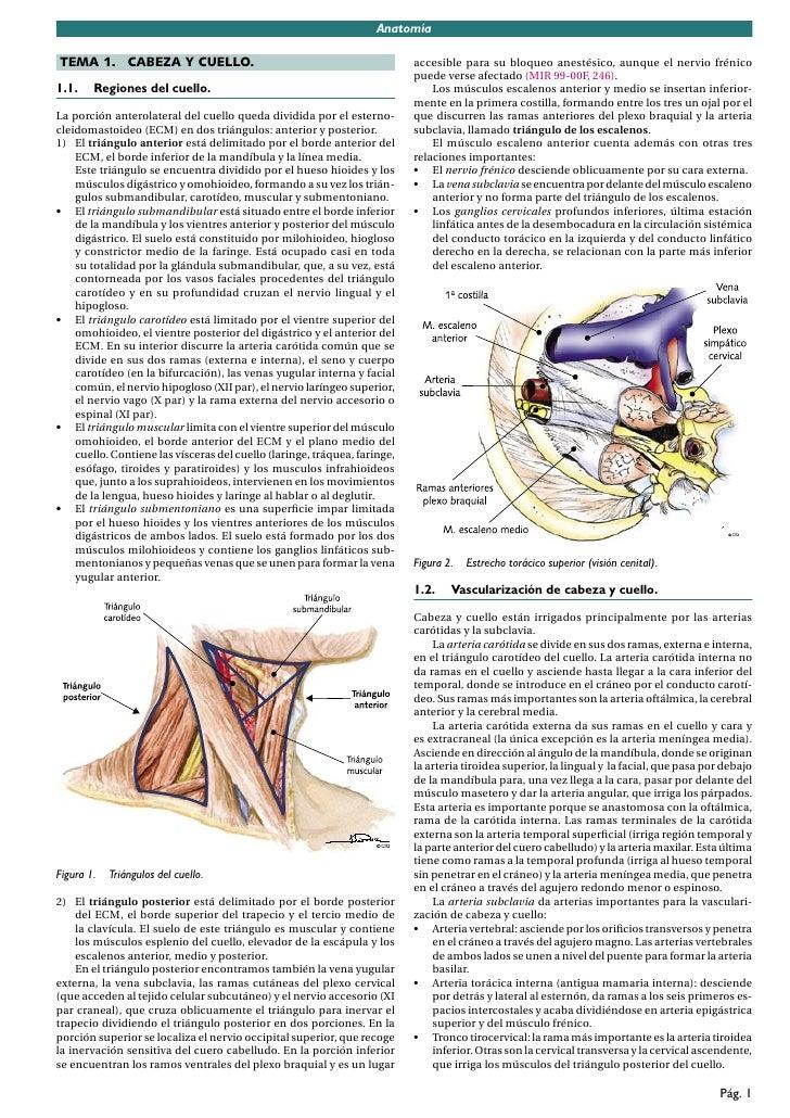 Manual Cto AnatomíA