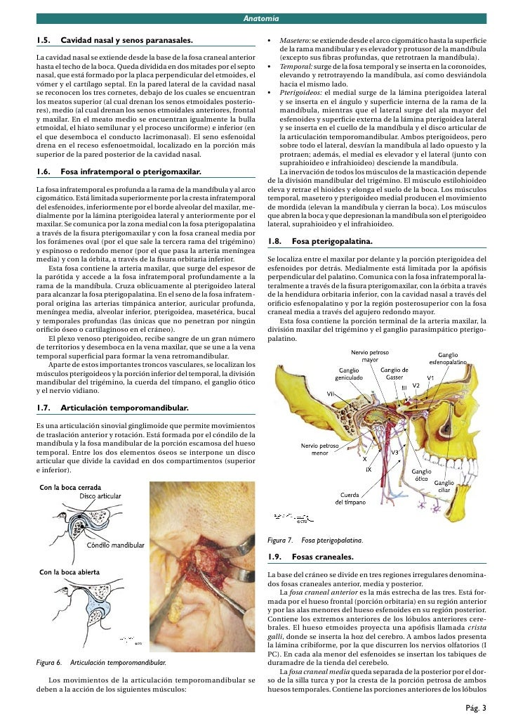 Bonito Anatomía Fosa Mandibular Viñeta - Imágenes de Anatomía Humana ...
