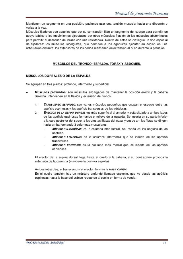 Fantástico Erguida La Anatomía Fila Adorno - Imágenes de Anatomía ...