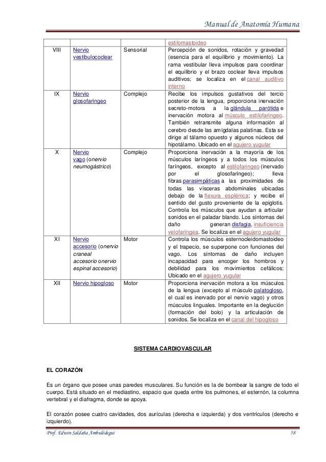 Manual de Anatomia Normal Humana Prof. Edwin Ambulodegui