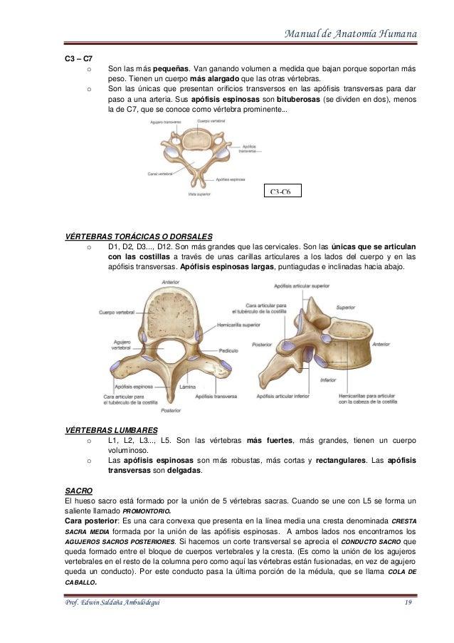 Contemporáneo Paso Anatomía 1 Friso - Anatomía de Las Imágenesdel ...