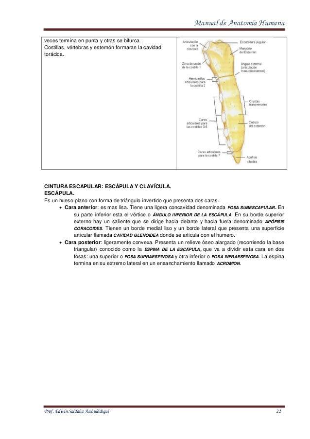 manual-de-anatomia-humana-22-638.jpg?cb=1413021374