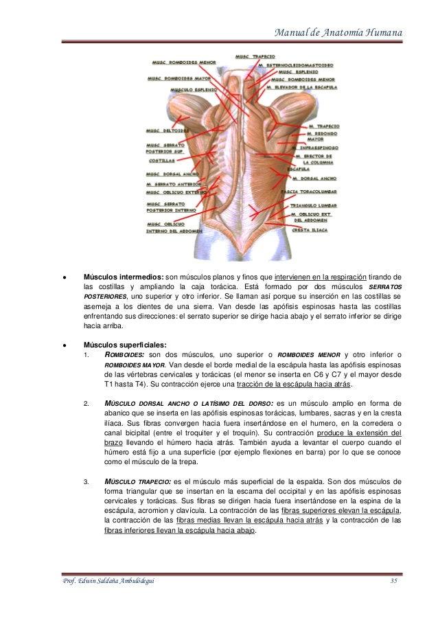 manual-de-anatomia-humana-35-638.jpg?cb=1413021374