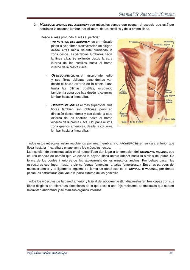 manual-de-anatomia-humana-39-638.jpg?cb=1413021374