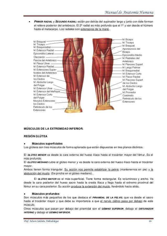 Lujo Lo Que Quiere Decir Largo Del Dedo En La Anatomía Colección de ...