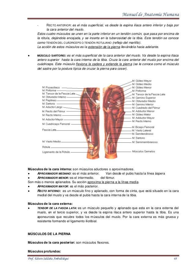 manual-de-anatomia-humana-48-638.jpg?cb=1413021374