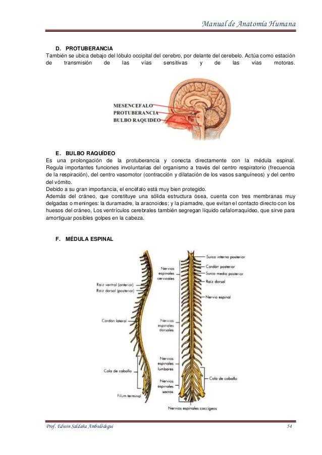 Encantador Anatomía De Los Clips Infierno Modelo - Anatomía de Las ...