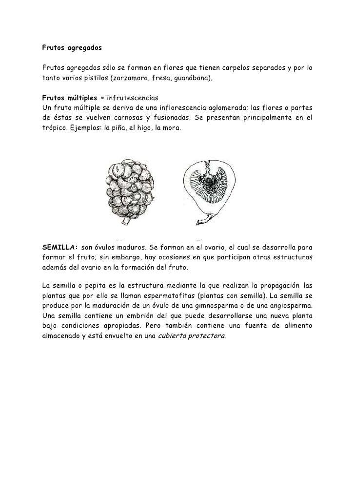 Manual de botanica general