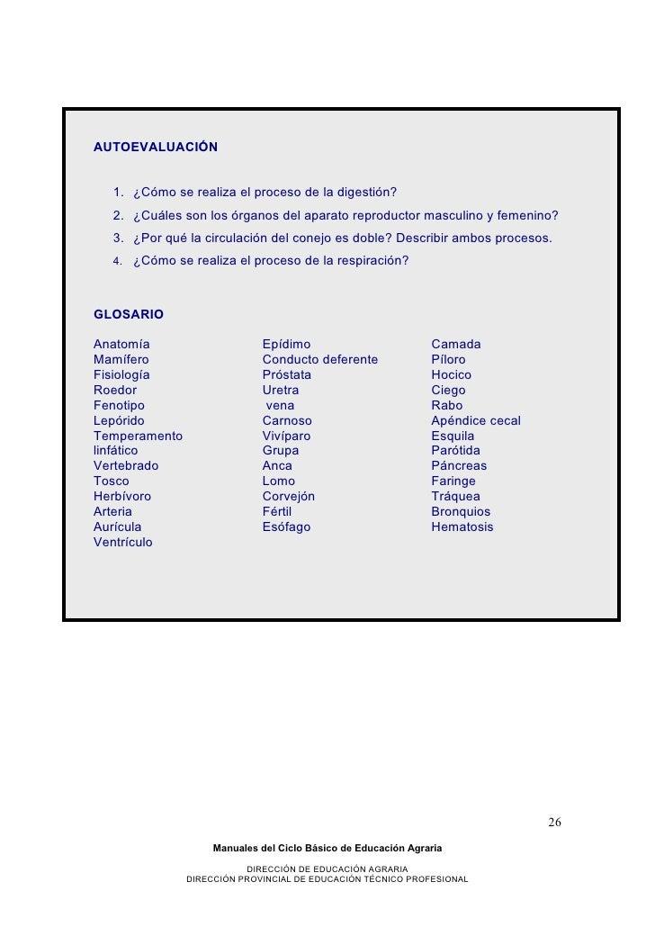Increíble Anatomía Del Sistema Reproductor De Conejo Festooning ...