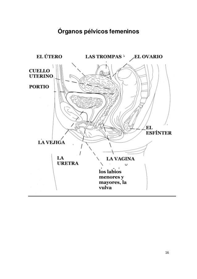 Manual de español médico para estudiantes de medicina