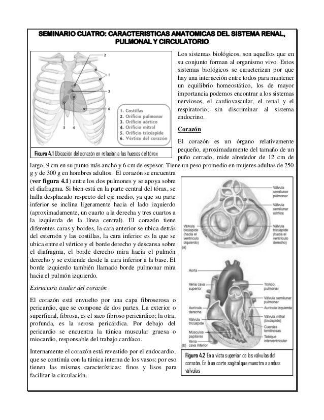Asombroso Hoja De Cálculo De La Anatomía De Aves Colección ...