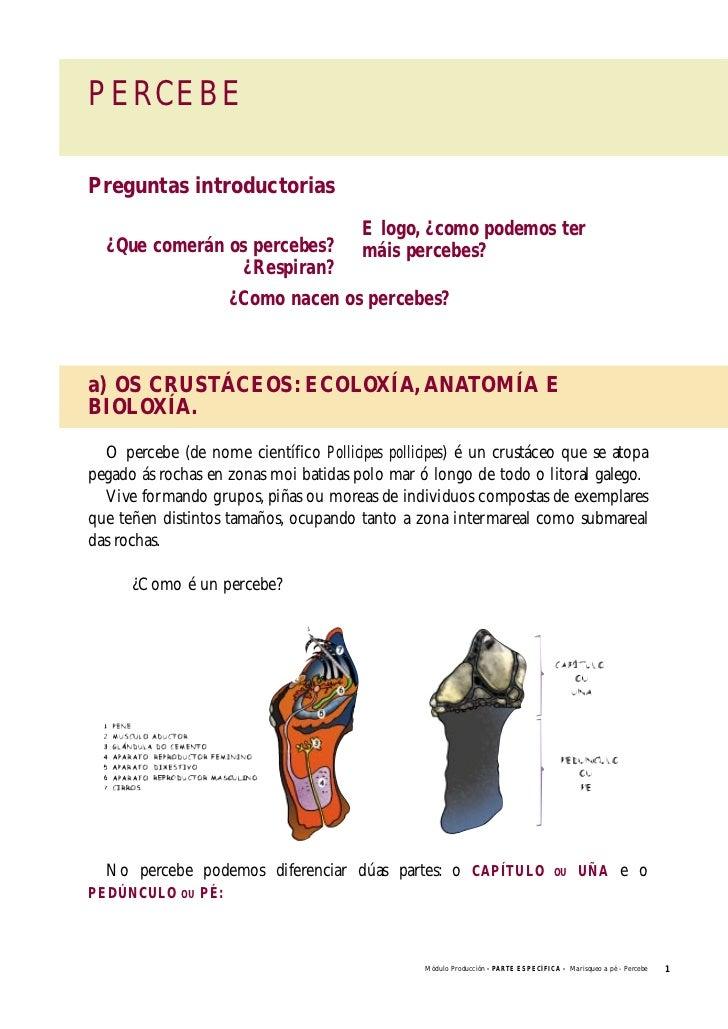 Manual de formación para o marisqueo 04. producción marisqueo do pe…