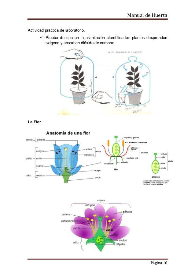 Perfecto La Actividad De La Anatomía De La Flor Elaboración ...