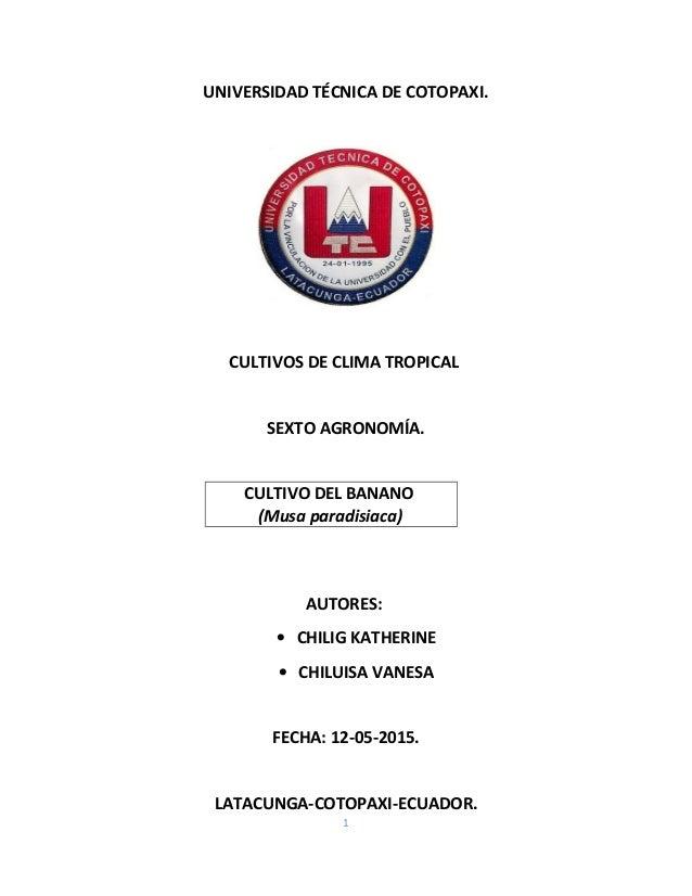UNIVERSIDAD TÉCNICA DE COTOPAXI. CULTIVOS DE CLIMA TROPICAL SEXTO AGRONOMÍA. CULTIVO DEL BANANO (Musa paradisiaca) AUTORES...
