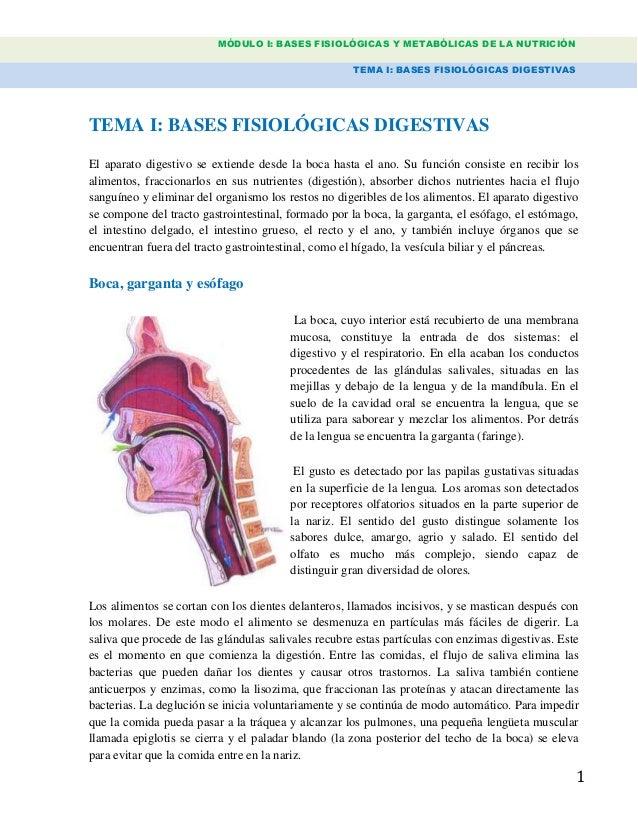 MÓDULO I: BASES FISIOLÓGICAS Y METABÓLICAS DE LA NUTRICIÓN TEMA I: BASES FISIOLÓGICAS DIGESTIVAS 1 TEMA I: BASES FISIOLÓGI...
