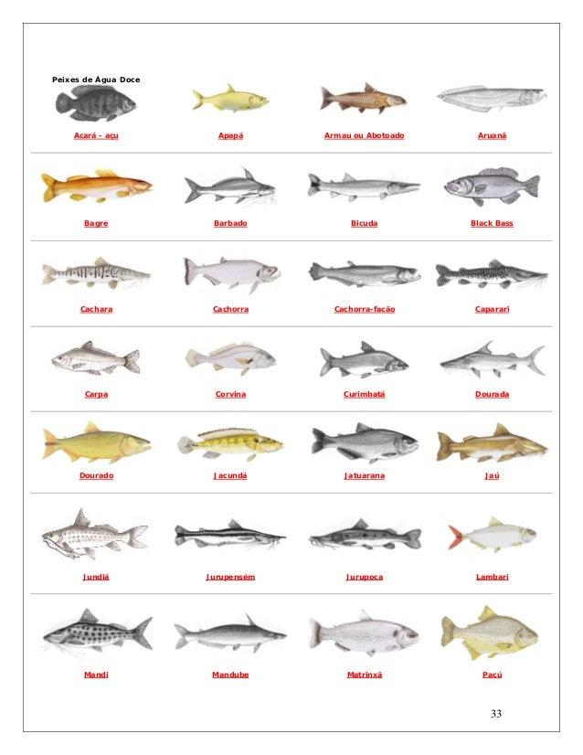 Populares Manual de pesca gratis XK24