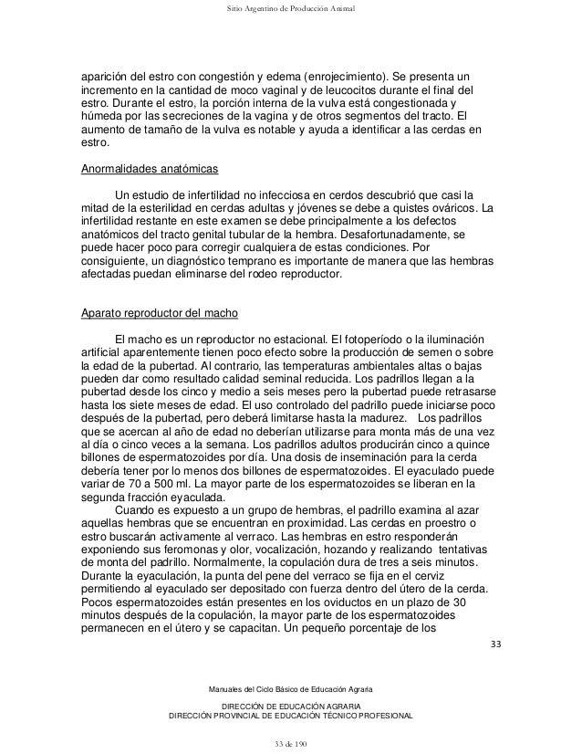 Único Anatomía Externa De Un Cerdo Fetal Motivo - Imágenes de ...