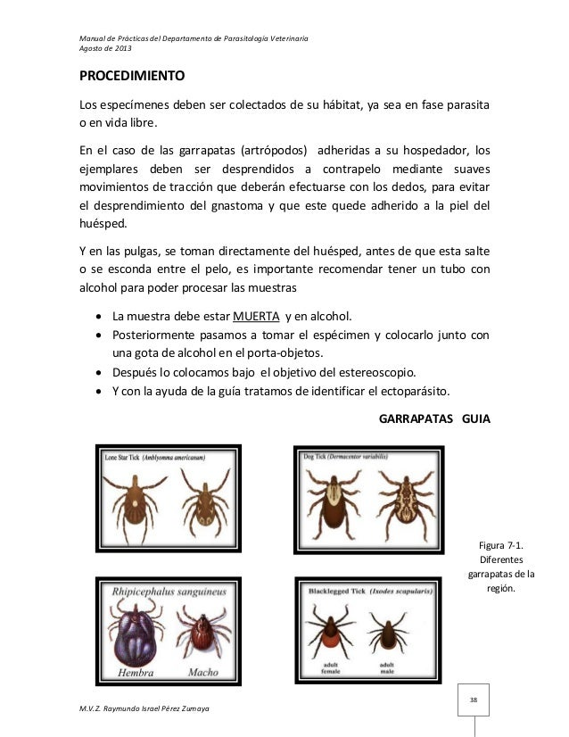 Manual de practicas del laboratorio de parasitología 2013