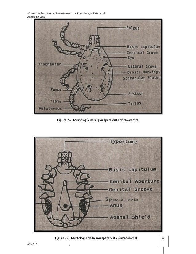 Vistoso Diagrama Anatomía Externa Hembra Patrón - Anatomía de Las ...