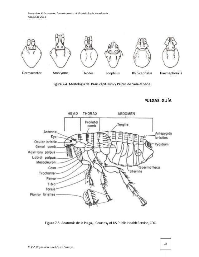 Dorable Diagrama De La Anatomía De Rata Fotos - Imágenes de Anatomía ...