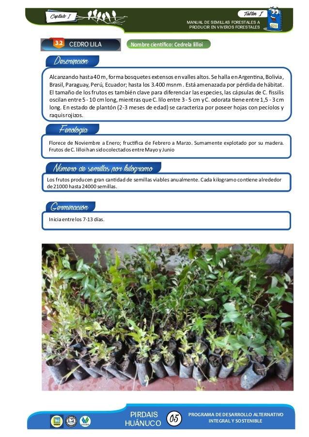 Manual de semillas forestales a producir en viveros for Manual de viveros forestales pdf