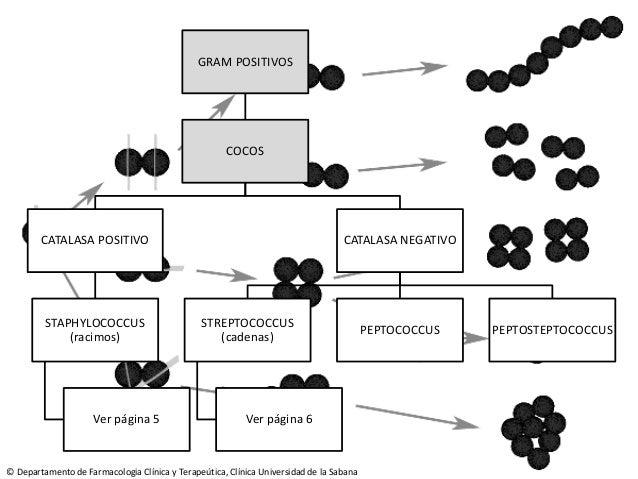 Manual de uso dirigido de antimicrobianos