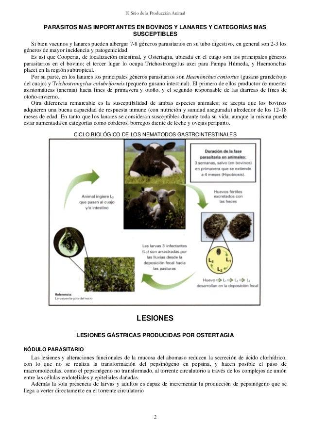 Manual larvas Slide 2