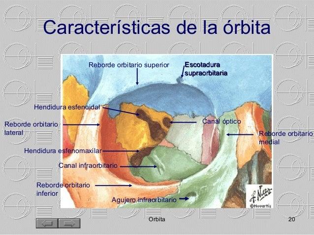 Manual morfologia ocular