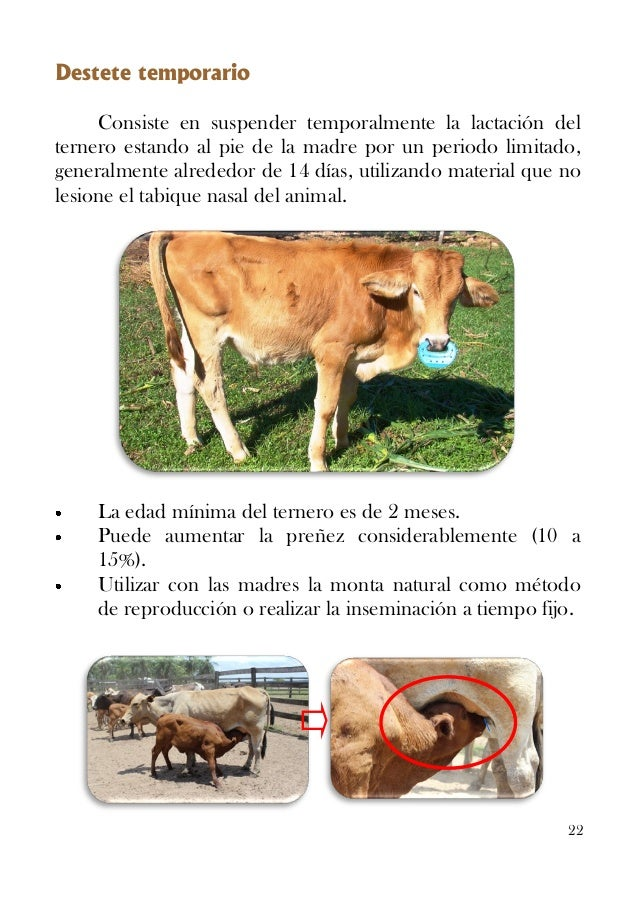 Manual para aumentar la tasa de procreo bovino