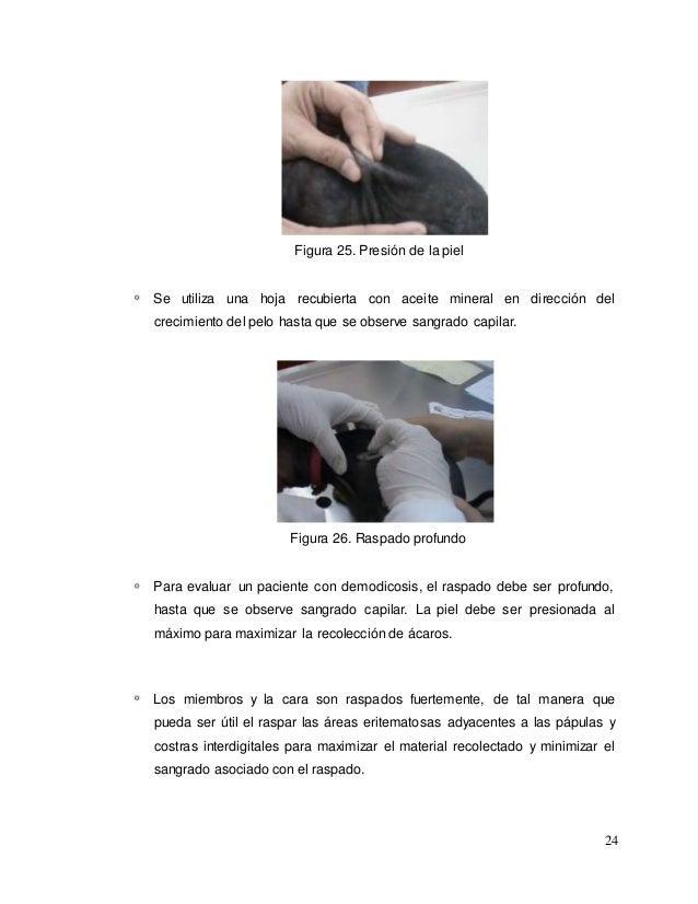 Manual practico de toma de muestra en caninos y felinos