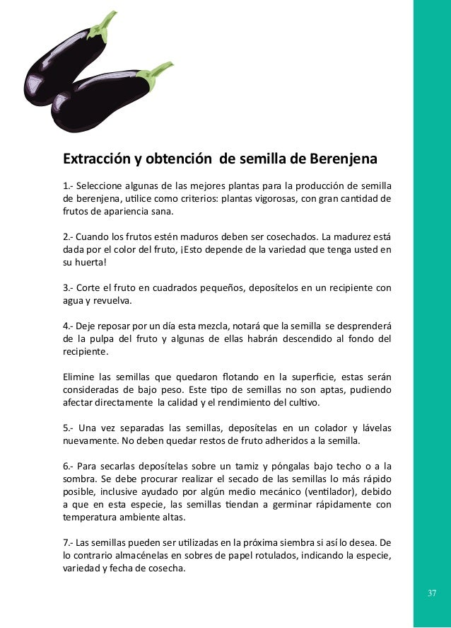 Manual producci n artesanal de semillas - Variedades de berenjenas ...