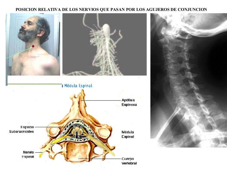 Manualrx04 columna for Agujeros en el cuerpo