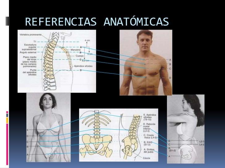 Increíble La Imagen De La Anatomía Columna Vertebral Colección de ...
