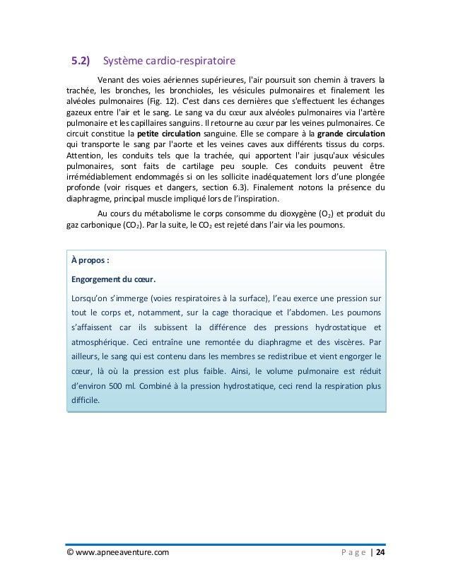 © www.apneeaventure.com P a g e   24 5.2) Système cardio-respiratoire Venant des voies aériennes supérieures, l'air poursu...