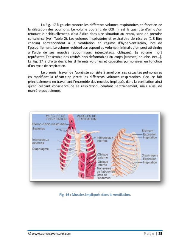 © www.apneeaventure.com P a g e   28 La Fig. 17 à gauche montre les différents volumes respiratoires en fonction de la dil...